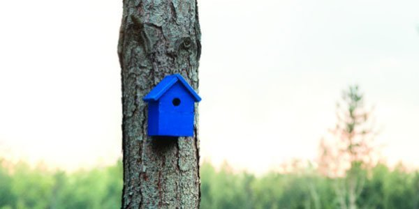 banner-about-us-birdhouse-xsmall