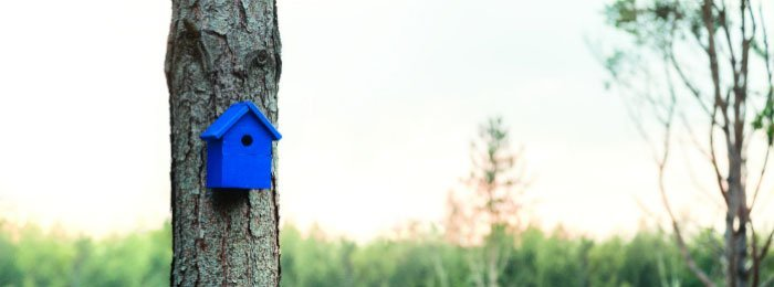 banner-about-us-birdhouse