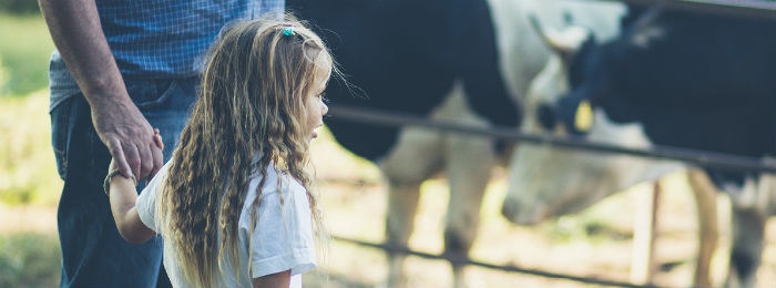 a girl holding her fathers hand looking at cows on a farm